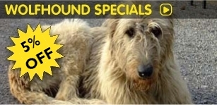 Special offers, Festival Tours, Christmas Tour of Ireland with Wolfhound Adventure Tours of Ireland